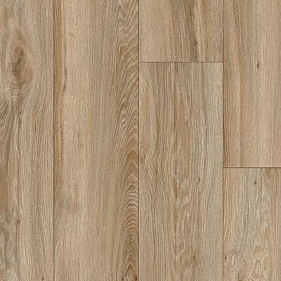 Blackjack Oak  22229